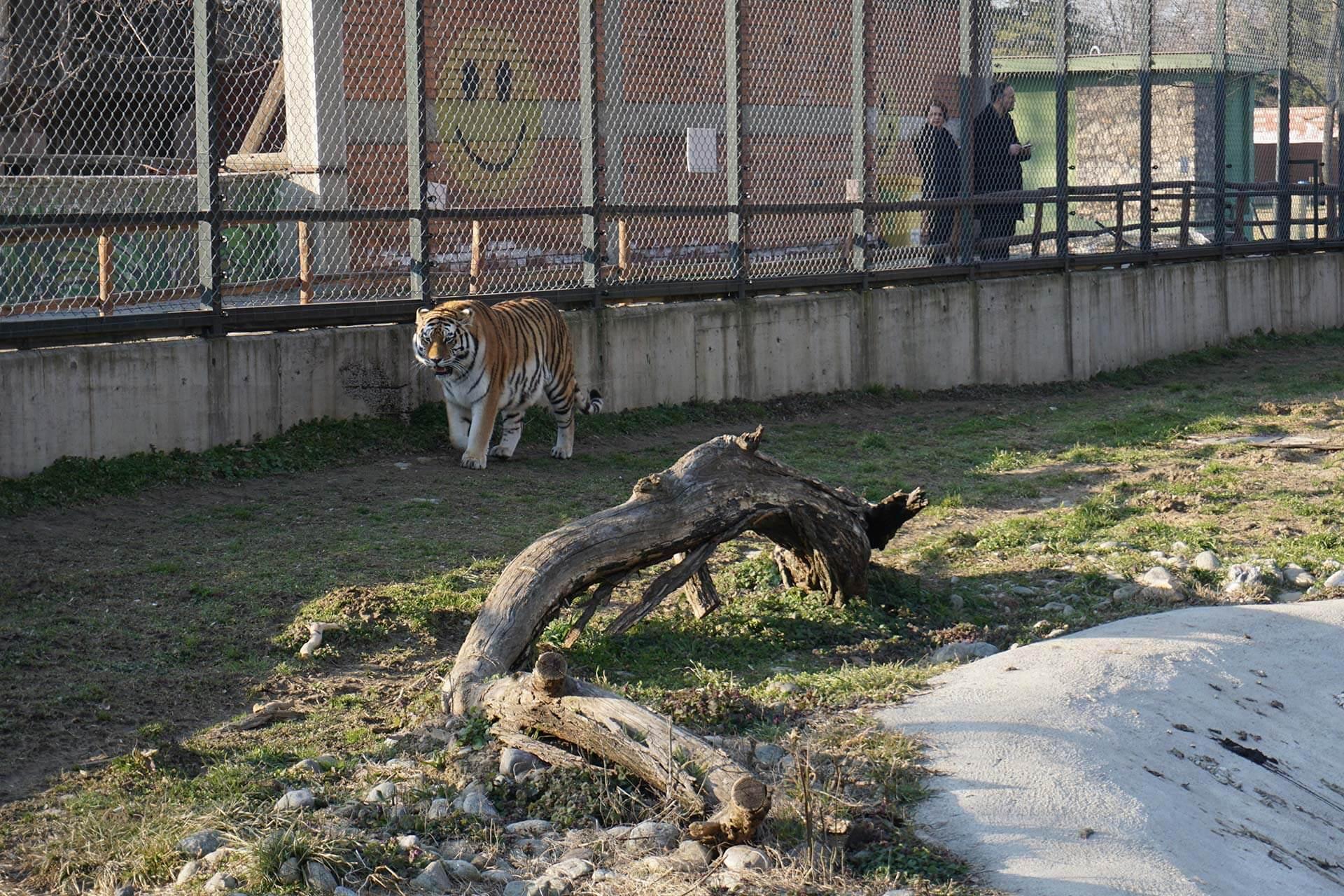 Üsküp Gezilecek Yerler Hayvanat Bahçesi